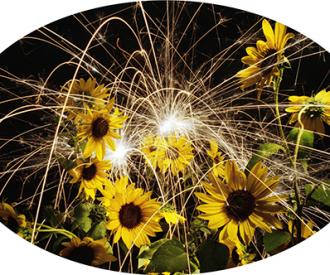 Flower Power<br>Titanium, Sunflowers<br>31 x 47
